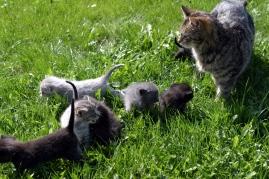 outdoor-cats